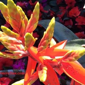 Flowers (photographed by Windermere Sun-Susan Sun Nunamaker)