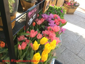 Trader Joe's-flower at a diagonal (credit: Windermere Sun-Susan Sun Nunamaker)
