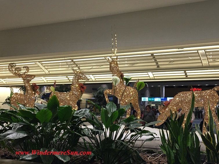 Holiday Reindeer at Orlando Airport (credit: Windermere Sun-Susan Sun Nunamaker)