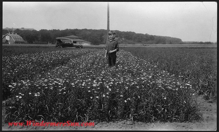 Child_in_a_flax_field._Minnesota_