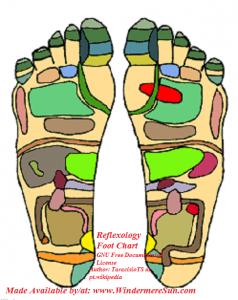 Reflexology Foot_Chart1, demonstrating the areas of the feet that practitioners believe correspond with organs in the zones of the body