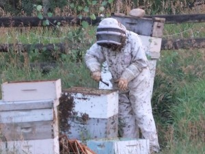 Jean and her honey bees of Winter Park Honey (credit: Winter Park Honey)