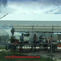 Bekemeyer Hydroponic Farm (1055 E. Story Road, Winter Garden, FL, 407-917-8068), photographed by Windermere Sun-Susan Sun Nunamaker