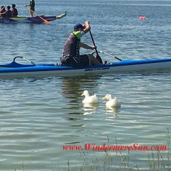 2 ducks joining the race of Duanwu/Dragon Boat Race Festival of June 4, 2016 at Lake Fairveiw Park of Orlando, FL (credit: Windermere Sun-Susan Sun Nunamaker)