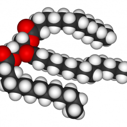 A fat, or triglyceride, molecule. Note the three fatty acid chains attached to the central glycerol portion of the molecule