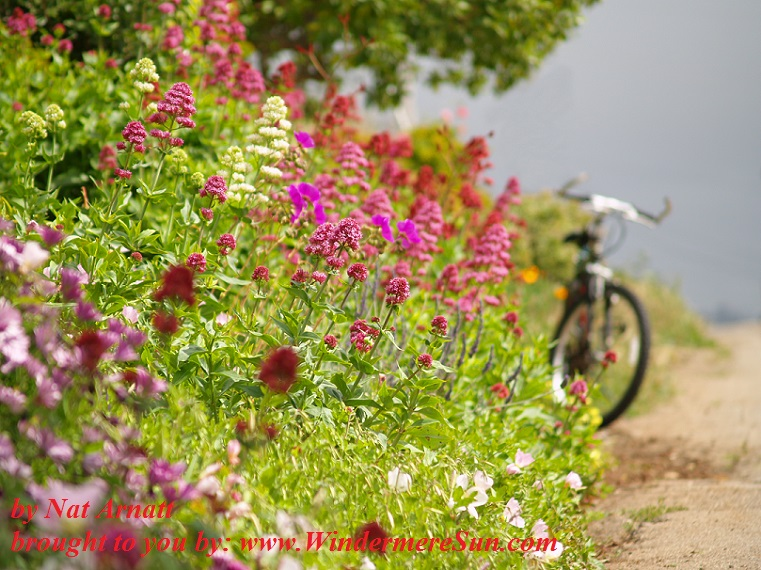 bike-with-flowers- by Nat Arnatt