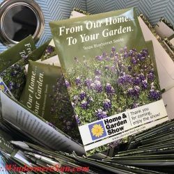 basket-of-bluebonnet-seed-packets (credit: Windermere Sun-Susan Sun Nunamaker)