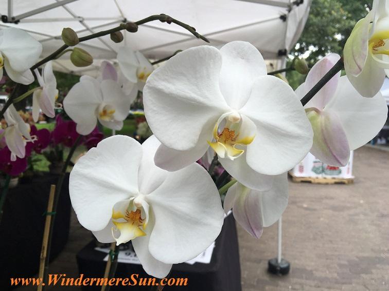 Orchid credit: Windermere Sun-Susan Sun Nunamaker)