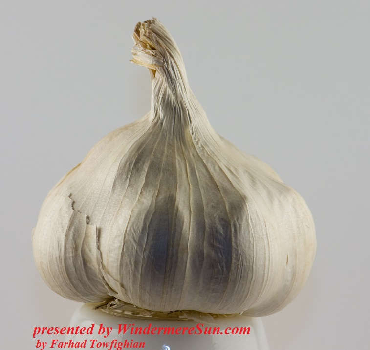 Garlic, by-farhad-towfighian