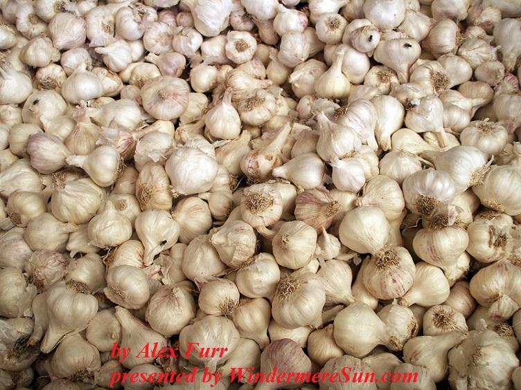 Garlics by Alex Furr