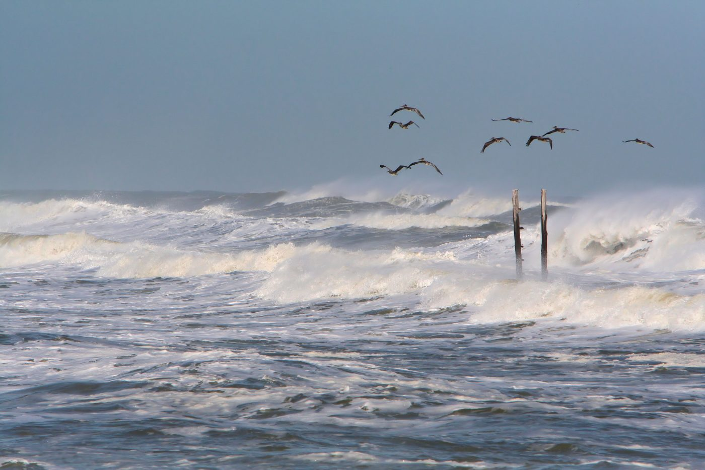 remnant of a hurricane-by jeff-jones