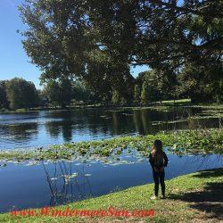 Looking at Lake Lily Park (credit: Windermere Sun-Susan Sun Nunamaker)