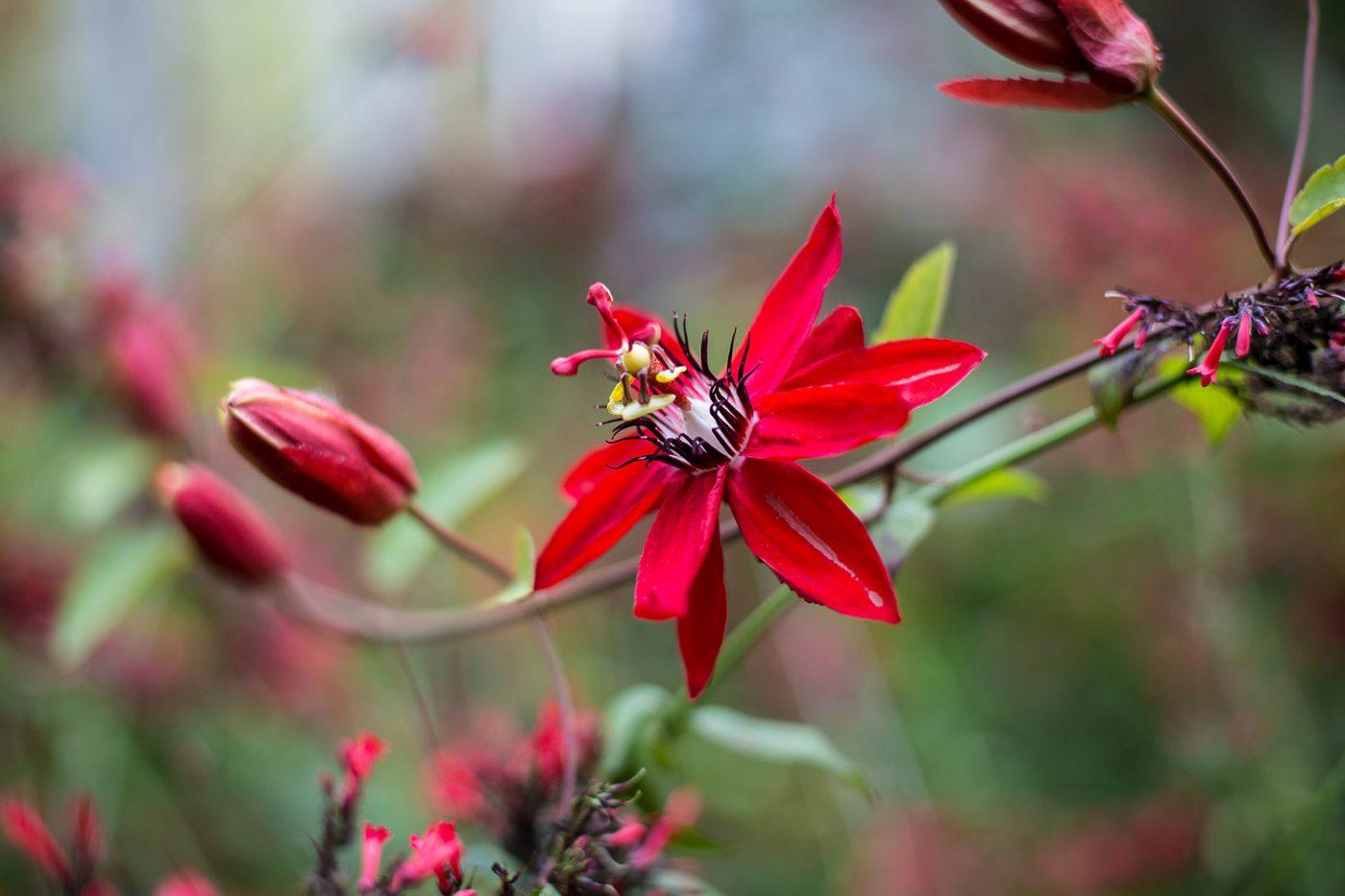 Blooms at Nehrling Gardens