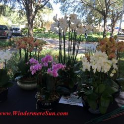 Orchids (credit: Windermere Sun-Susan Sun Nunamaker)