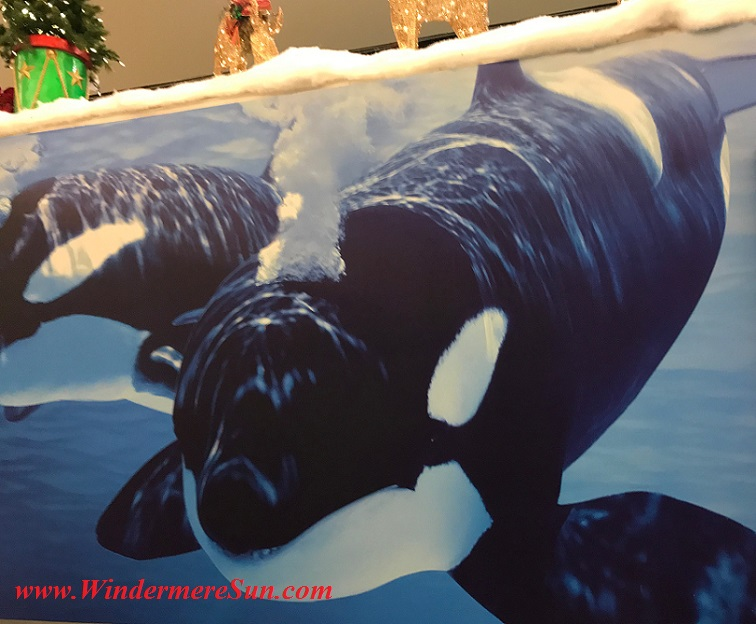 SeaWorld Ad at Orlando Internaional Airport (credit: Windermere Sun-Susan Sun Nunamaker)