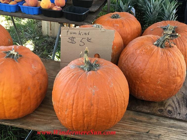 Pumplins (credit: Windermere Sun-Susan Sun Nunamaker)
