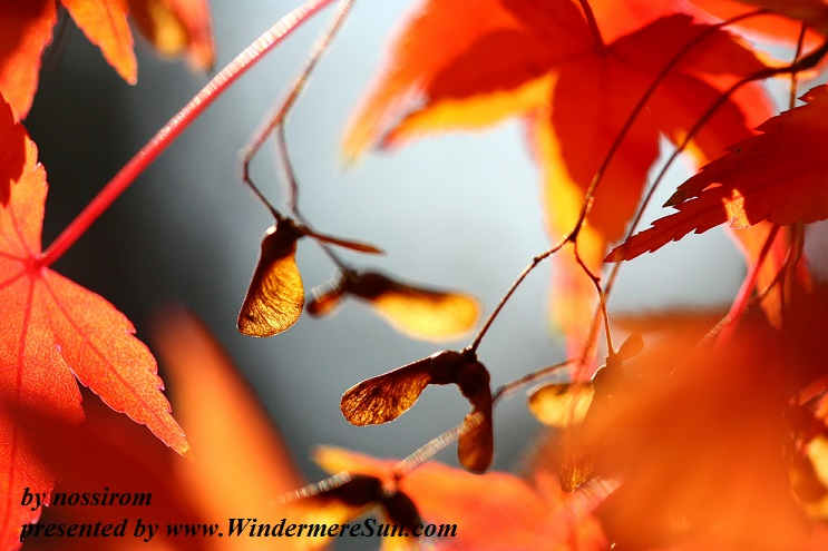 Autumn Leaves (Credit: nossirom)